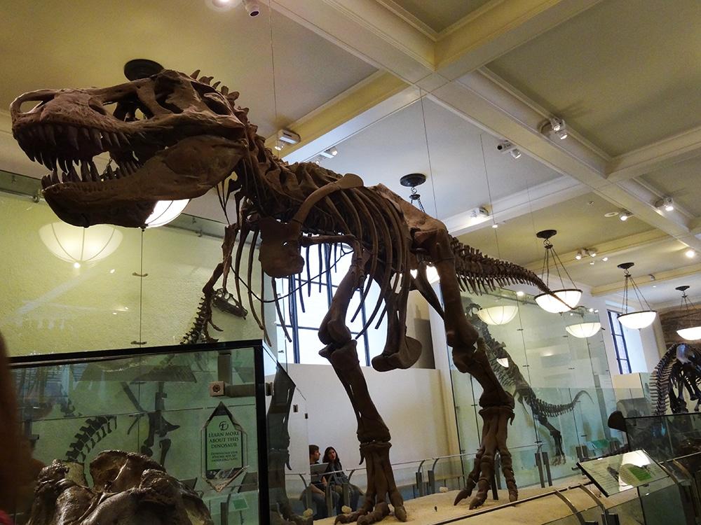 13 Passeios Grátis em new York - Museu de História Natural
