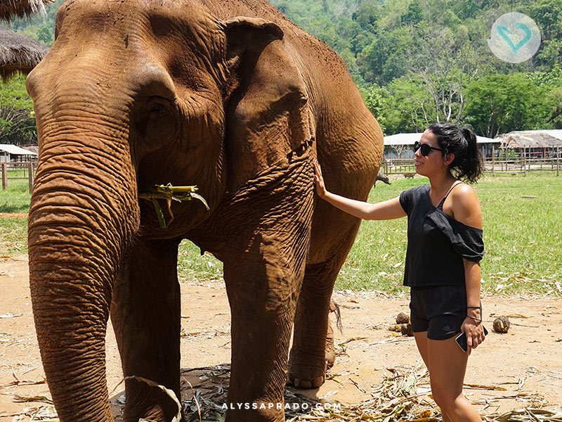 Procurando um lugar onde os elefantes só interagem se quiserem? Então conheça o Elephant Nature Park, passeio ético com elefantes na Tailândia. É só clicar no link!