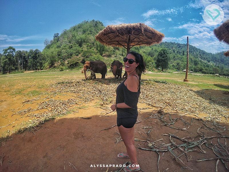 Conheça tudo sobre o Elephant Nature Park, passeio ético com elefantes na Tailândia! É só clicar no link!