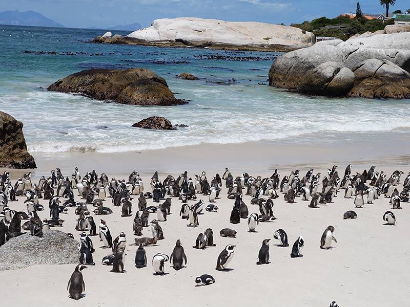 Boulders Beach, a praia dos pinguins, um dos passeios mais famosos do roteiro pela Cidade do Cabo! Confira o que fazer na região mais bonita da África do Sul nesse post!