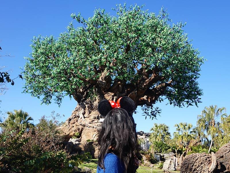 Planejando uma viagem para Disney? Então descubra nesse post se é mais barato comprar pacotes de viagem ara Disney ou viajar por conta própria!